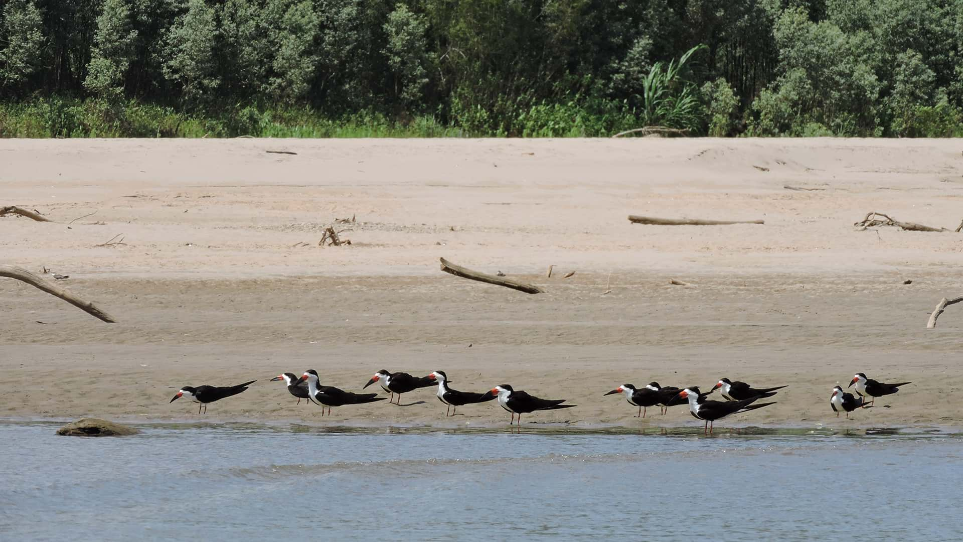 11Birds resting on the banks of the river | Responsible Travel Peru