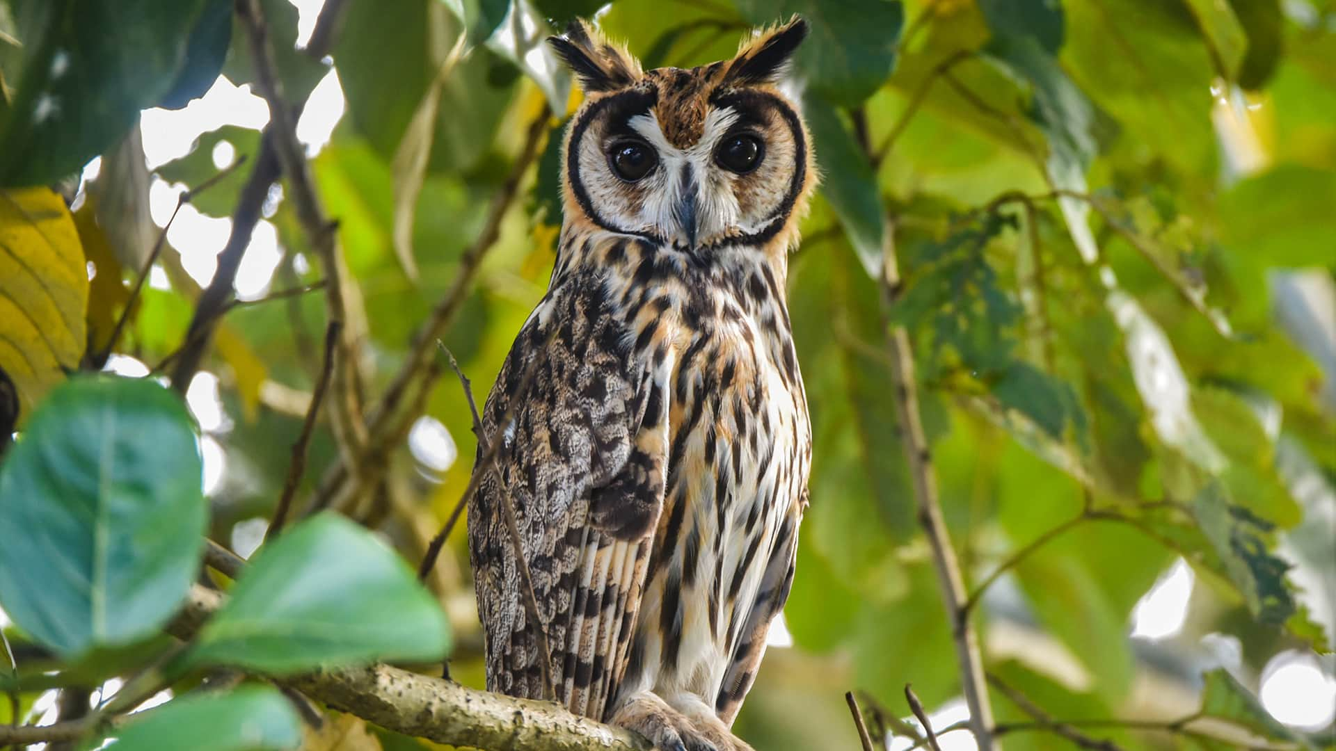 11Owl standing in a brach during the day   Responsible Travel Peru