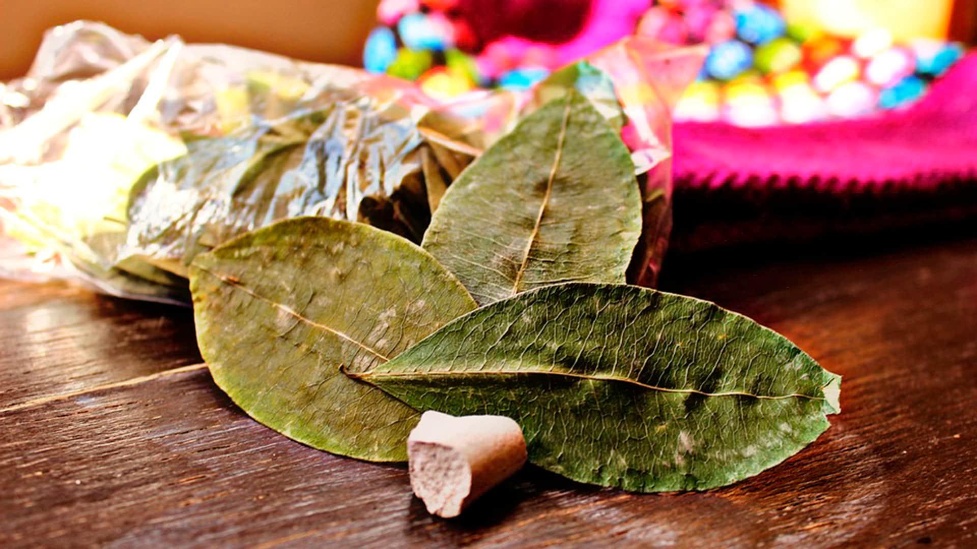 coca leaf kintu