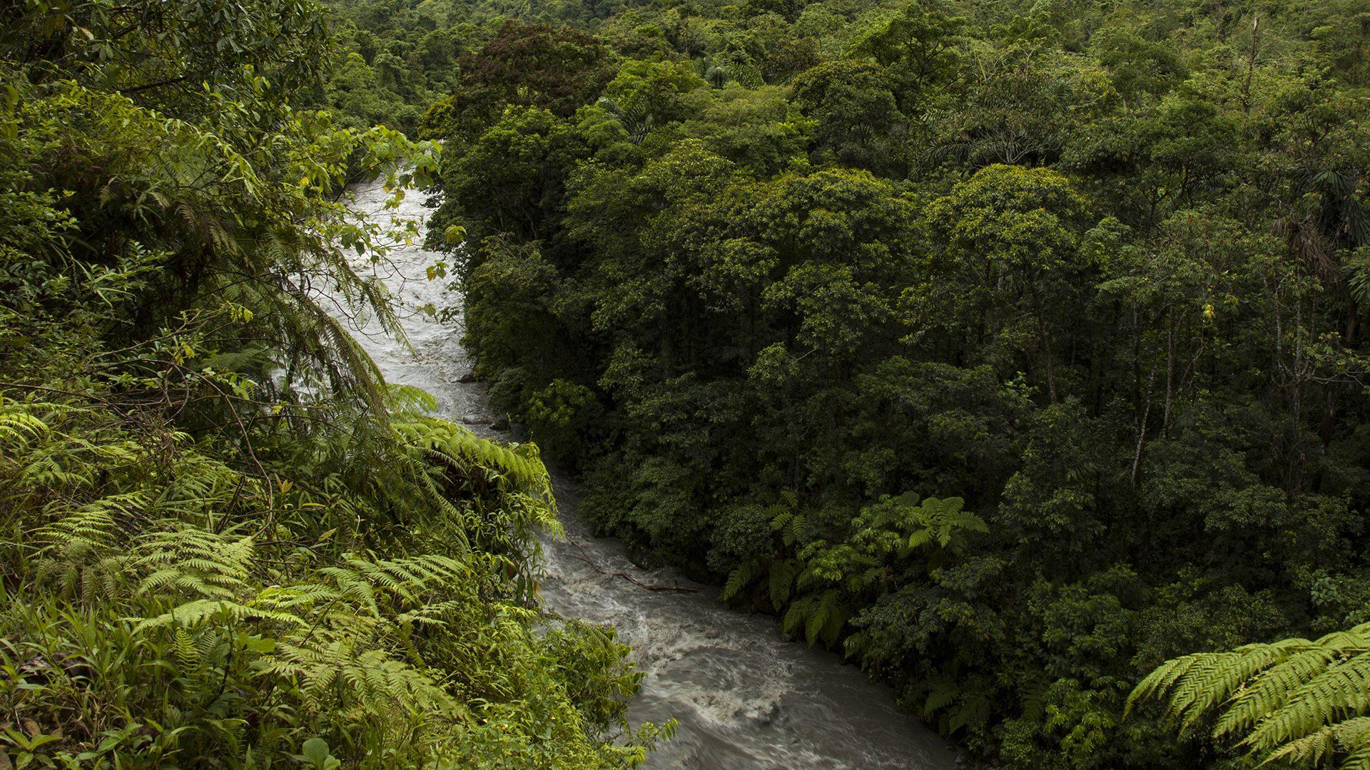 Torrential river and lush jungle in Manu   Responsible Travel Peru