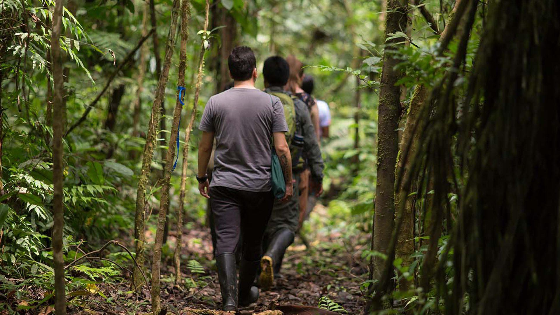 Group walking on a trail around Pankotsi lodge in Shipetiari, Manu   Responsible Travel Peru